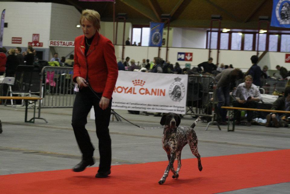 met sjelsa Brussel dogshow